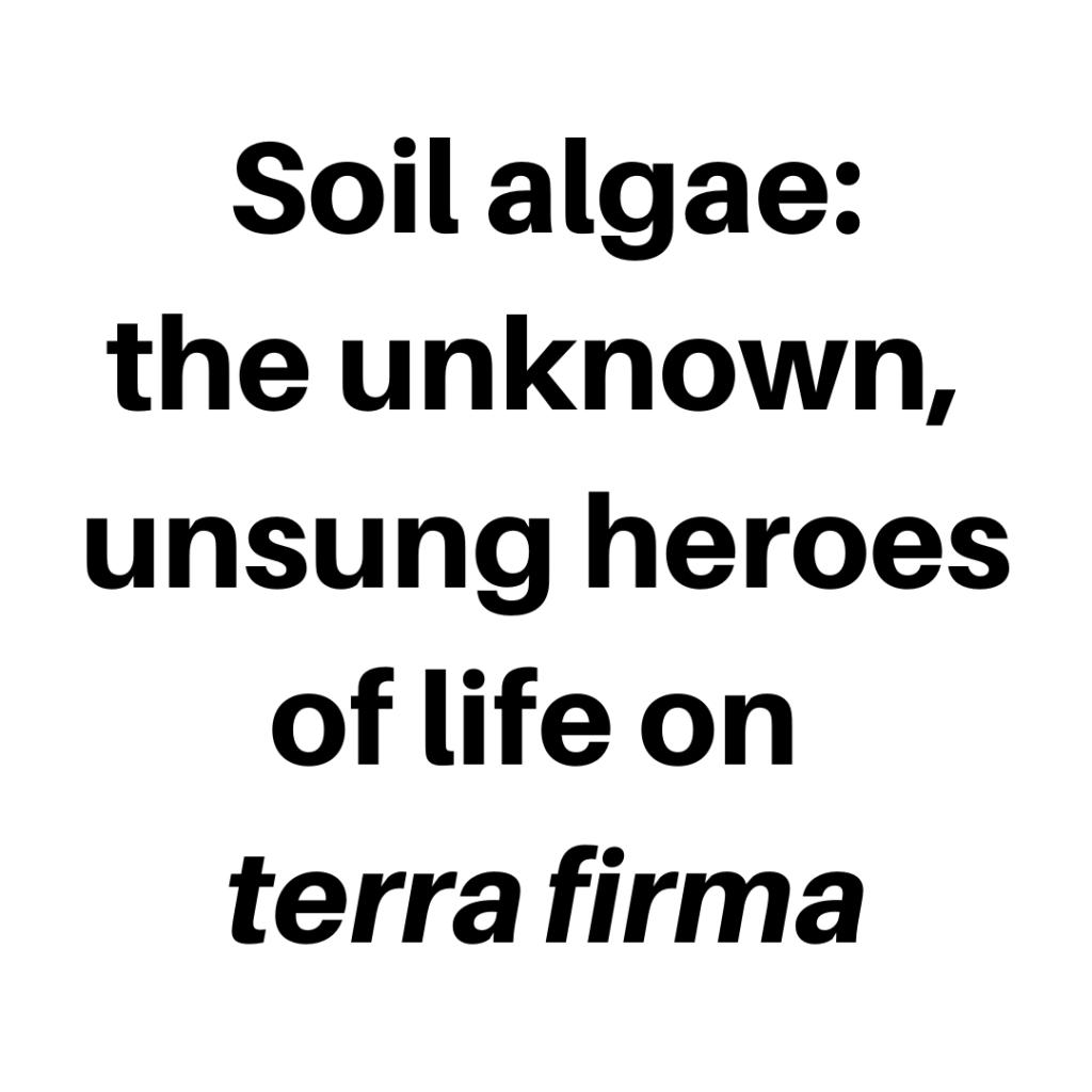 Soil algae  1