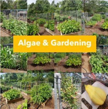 Algae new e1620339198907